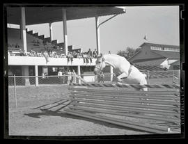 Horse jumping over obstacle in arena