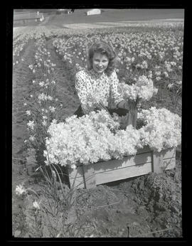 Woman posing with daffodils at Oregon Bulb Farms