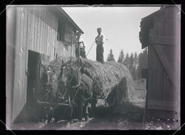 William Finley Loading Hay