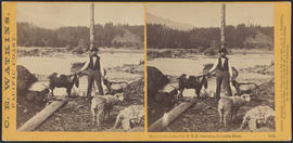 """View on the Columbia, O.R.R. Cascades, Columbia River."" (Stereograph 1302)"