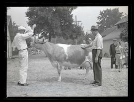 Men with cow