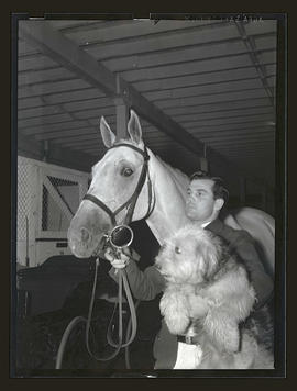 B. C. Tremaine? with Sky Crown and dog, probably at Pacific International Livestock Exposition