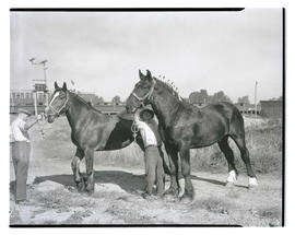 Two men with draft horses