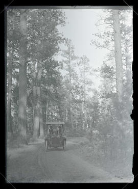 Automobile in the Forest