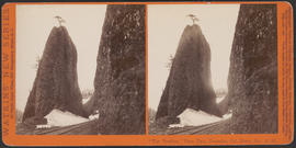"""'The Needles,' View East, Cascades, Col. River, Or."" (Stereograph E30)"