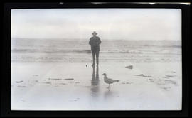 Man photographing a gull
