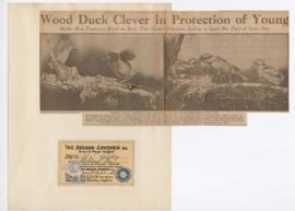 """Wood duck clever in protection of young"""