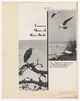 """Camera shots of rare birds"""