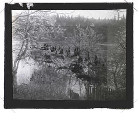 Fused lantern slides of cormorants and trees