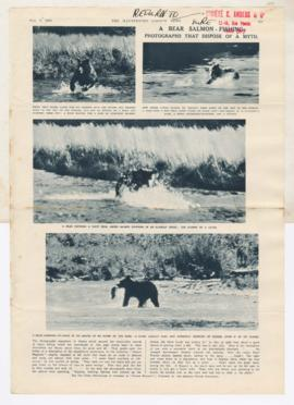 Images of bear catching salmon